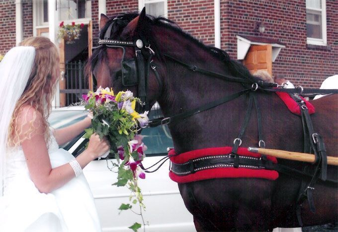 Horse drawn ride for bride and groom