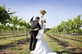 Grafton Winery The Vineyards