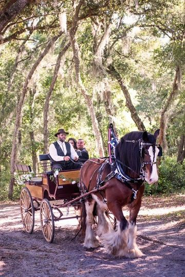 clyesdales horse n carriage 51 627612 1569250957