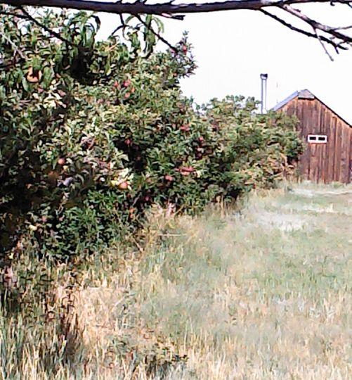 apples2012