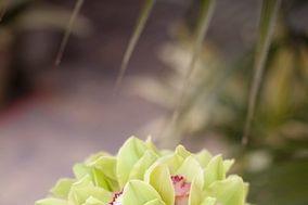 Flora Linda Design
