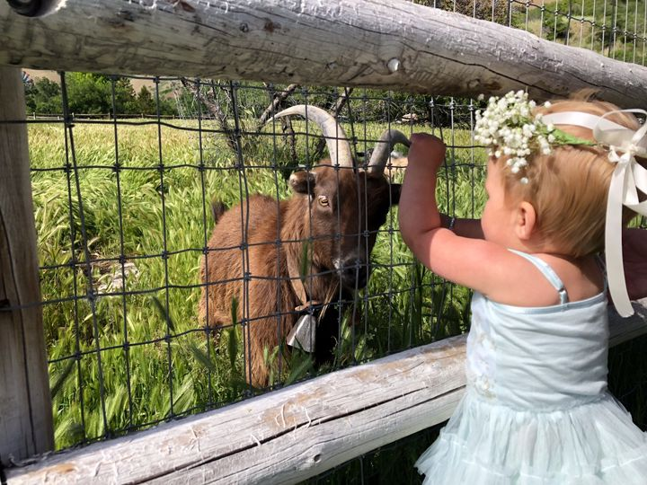 Our Goats are loved by guests
