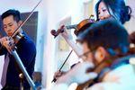 Cattus Quartet image