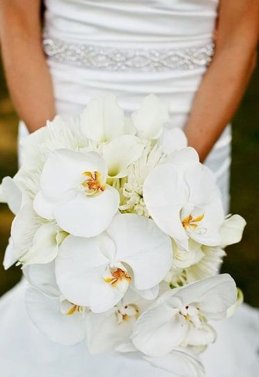 All white flowers