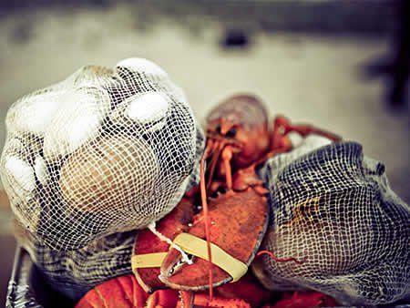 LobsterClambake