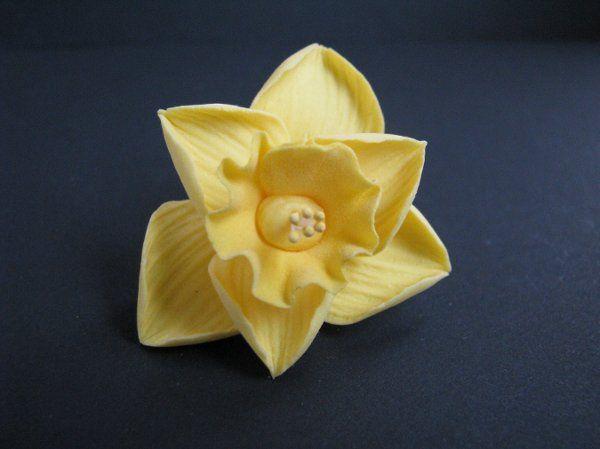 Daffodil - Yellow
