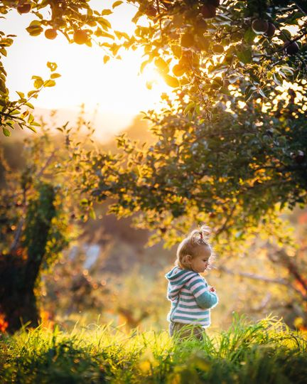 Child and Apple Orchard.