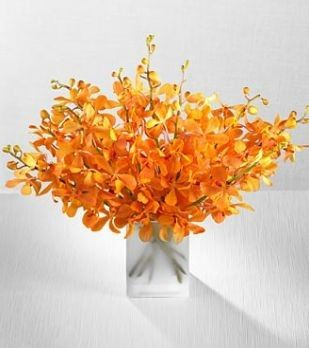 Tmx 1376413268386 Orange Citrine Orchid Flowerssummer Wedding Centerpiece Bradenton, Florida wedding florist