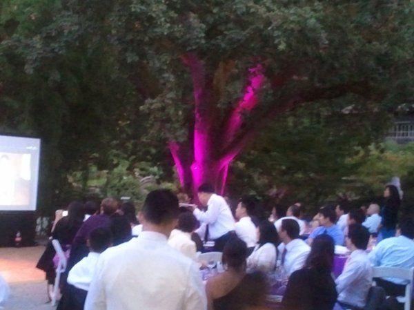 Wedding at Hakone Gardens in Saratoga. Day time lighting of Giant Oak Tree.