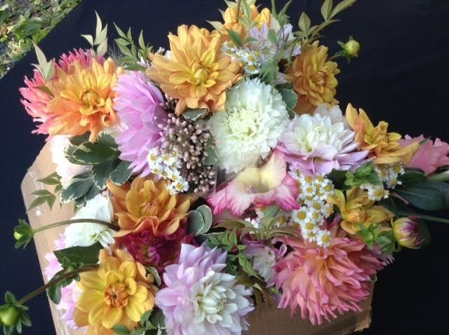 Tmx 1531424972204 1 Julian, PA wedding florist