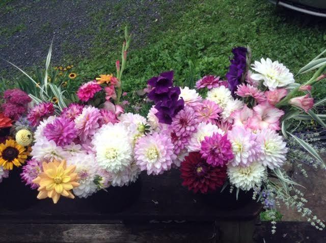 Tmx 3 51 637722 V2 Julian, PA wedding florist