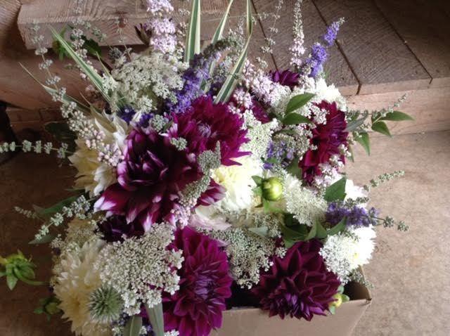 Tmx 5 51 637722 V2 Julian, PA wedding florist