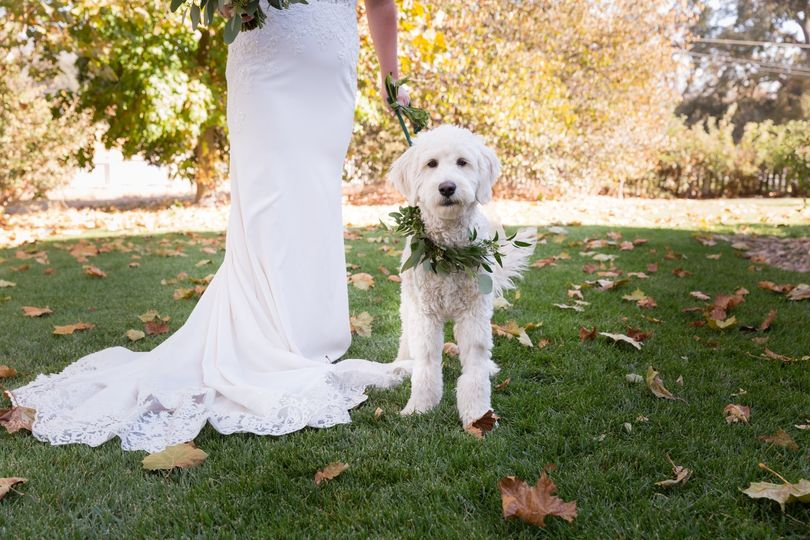 Wedding Dog C Sedley Photo