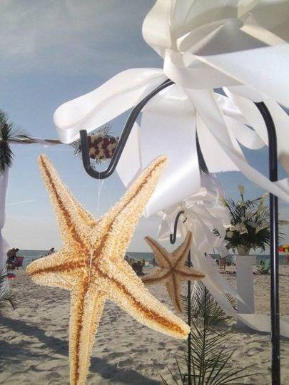 Starfishinthesun