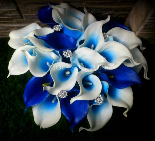 blue lily picture