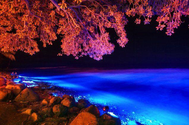 Olowalu Plantation Estate Beach Lighting