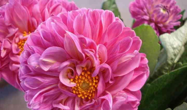 Empire Flower Supply