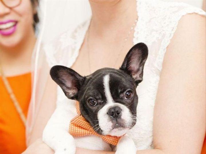 Tmx 1484700603580 Puppy With Bride Knoxville, TN wedding florist