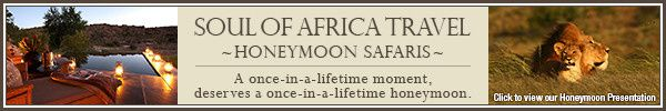 soulofafrica web