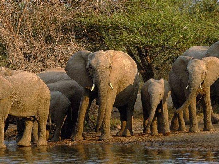 Tmx 1423423406243 Elephants Laguna Beach wedding travel