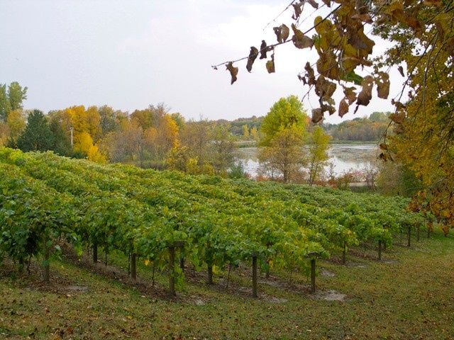 Tmx 1457626336163 Vineyard Chisago City, Minnesota wedding venue