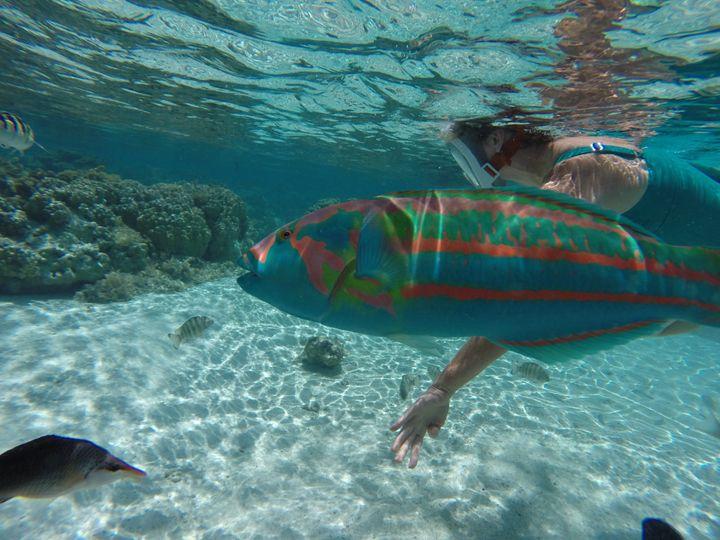 Tmx Fish 7 51 977632 1568739907 Las Vegas, NV wedding travel