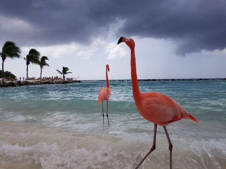 00086d5c4c9f1d26 1517668220 e78c3a95906c0feb 1517668102166 4 Renaissance Aruba