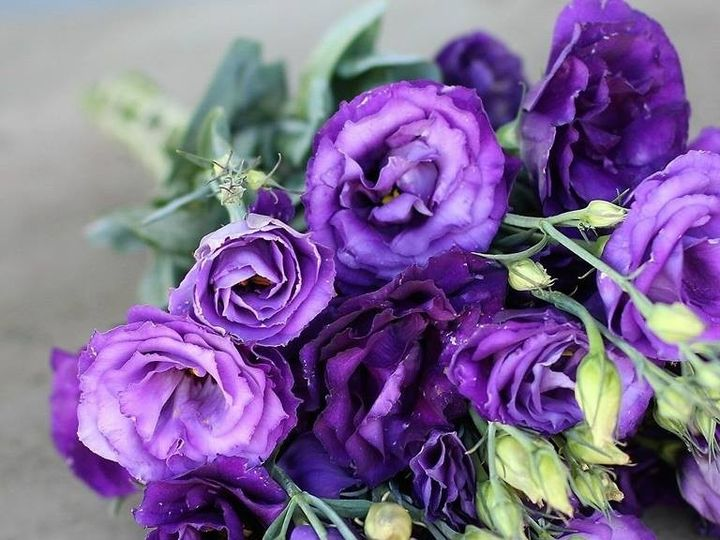 Tmx 1486446315037 141178261220415481312757349899424758694652n Paterson wedding florist