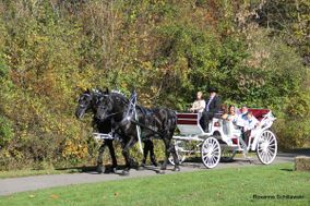 JK Percherons - Horse Drawn Carriage Service