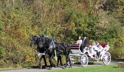 JK Percherons - Horse Drawn Carriage Service