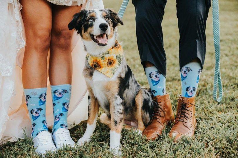 Newlyweds' socks and dog