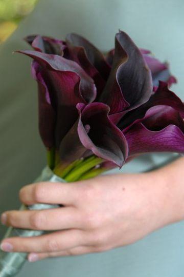 purplecallas
