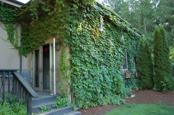 The guest home is private and sits in the side yard. A small replica of the main home. Charming...