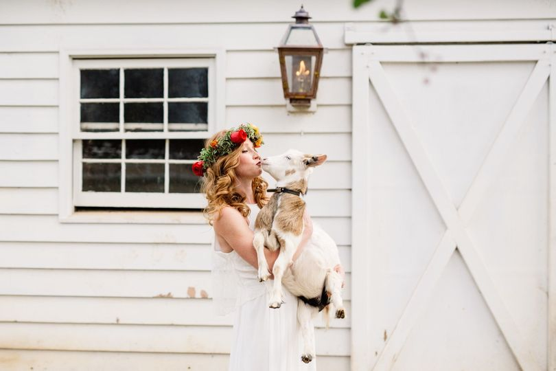 Bride carrying a goat