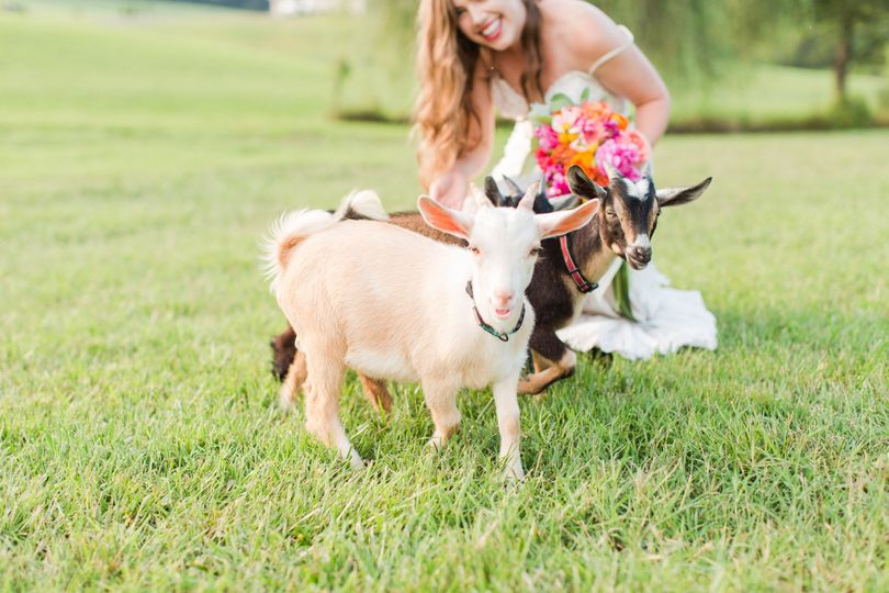 The bride with the goats
