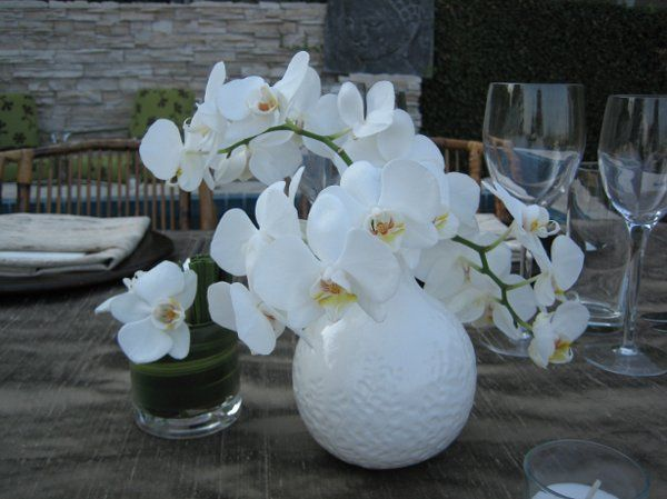 800x800 1223276205485 whiteorchids
