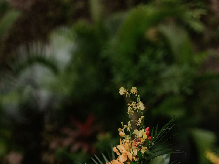 Tmx 20200118 160551 Sbpd7799 Websize 51 933752 159044943695754 Puerto Vallarta, MX wedding planner