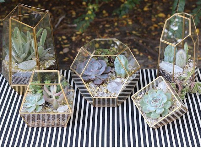 Succulent Terrariums.