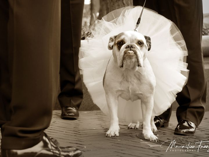 Tmx 1534791228 6991ffc9da9fd166 1534791226 2c9acf80c1174be4 1534791220780 45 Bull Dog Wedding Phoenix, MD wedding photography