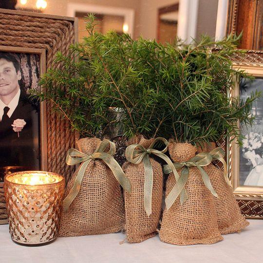 Hemlock Wedding Favor Seedlings with green ribbon