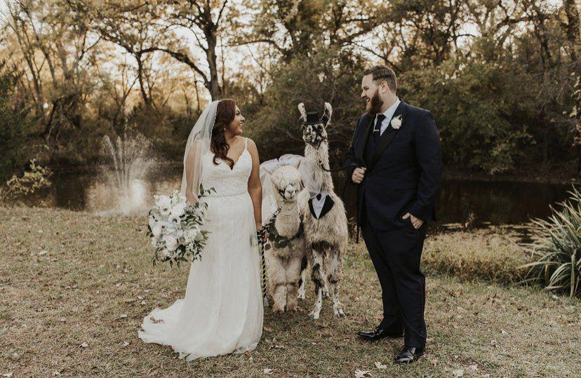 We have llamas!
