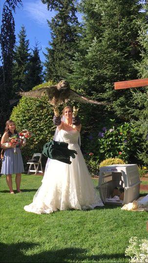 Owl Release in Bellingham