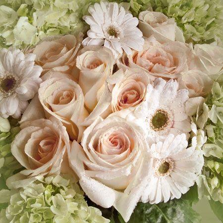 roses daisies