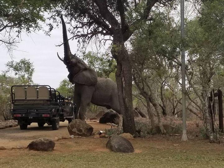 Tmx South Africa Elephants Kruger Natl Park 51 202562 157539348328493 Whippany wedding travel