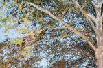 Terrain at Styer's image