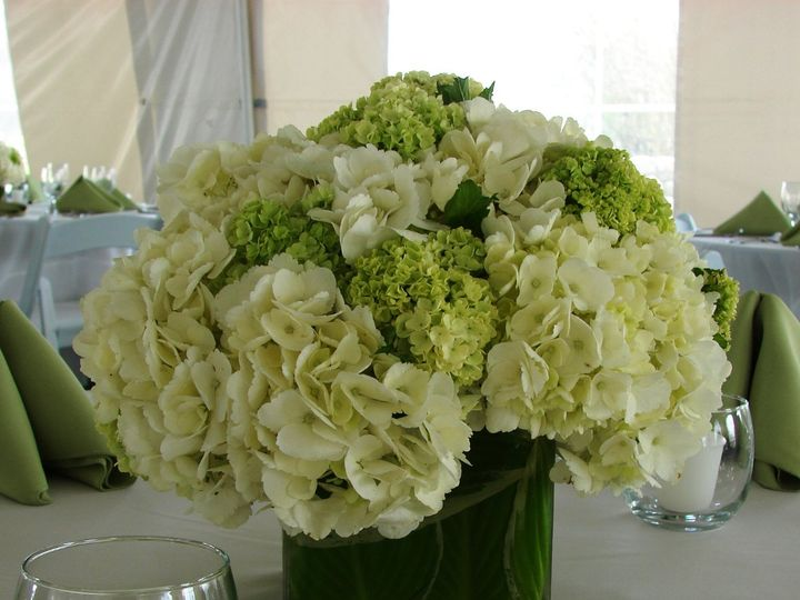 Tmx 1360273281749 Whitehydrangeagrnviburnum North Falmouth wedding florist