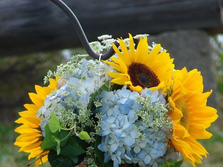 Tmx 1360273867786 Masonjarofsunflowersandhydrangea North Falmouth wedding florist