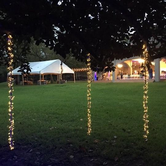 Fairy lights on trees