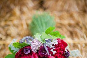 Flowers & Beyond