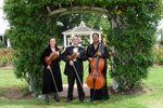 Arte Musicale String Ensemble image